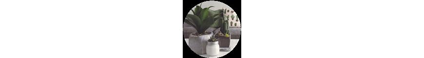Plantas decorativas I Iglú tiendas